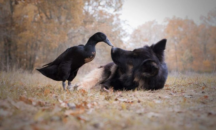 These 14 Photos Showing 2 Cute Animals' Friendship Will Make Your Heart Melt
