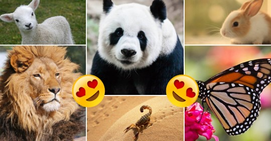 Which Animal Do You Turn Into When You Fall In Love?